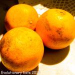 Texas Oranges 1
